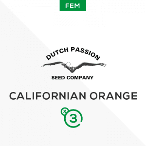 DUTCH PASSION – Californian orange