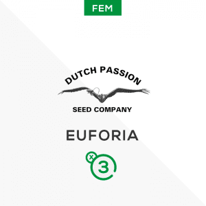 DUTCH PASSION – Euforia