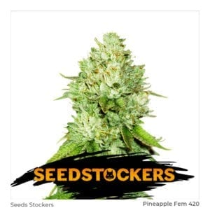 Seed Stockers – Pineapple Fem x3