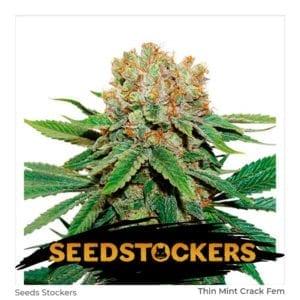 Seed Stockers – Thin Mint Crack Fem x3