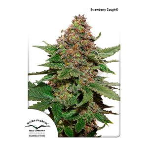 DUTCH PASSION – Strawberry Cough