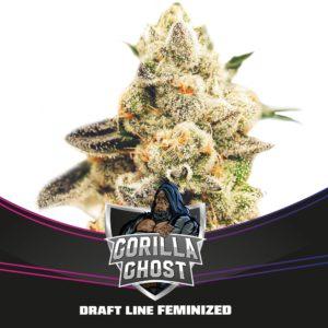 BSF – Gorilla Ghost