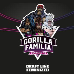 BSF – Gorilla Familia x12