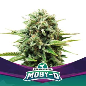 BSF – Moby D