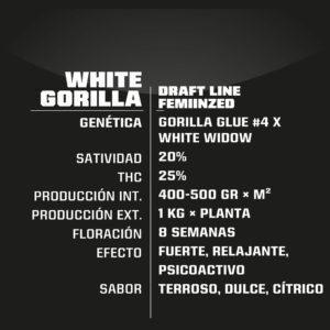 BSF – White Gorilla